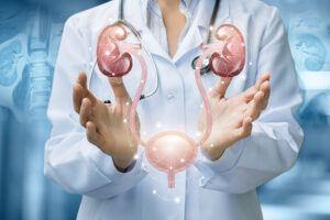 Nieren und Blase